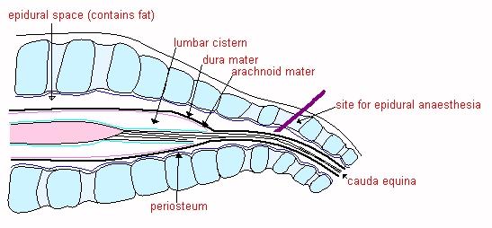 lumbar cistern
